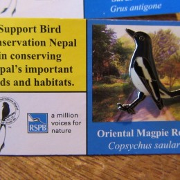 「oriental magpie robin (シキチョウ)」