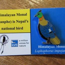「himalayan monal (ニジキジ )」  ・・ちなみに、この子がネパールの国鳥だそうです。