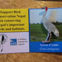 「sarus crane (オオヅル)」