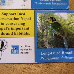 「long tailed broadbill (オナガヒロハシ)」