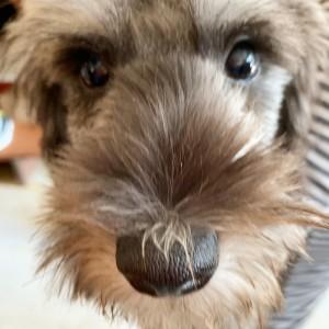 「ヨロシク~ワンッ!。」(ねえちゃん家に家族の仲間入りしたての愛犬(シェフ?コック??)からの一言でした・・。)